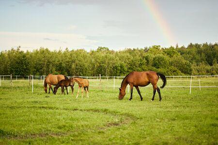 beautiful horses on a meadow in summer Standard-Bild - 149844378