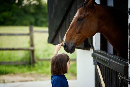 Little girl strokes a beautiful horse in the barn Standard-Bild - 149847581