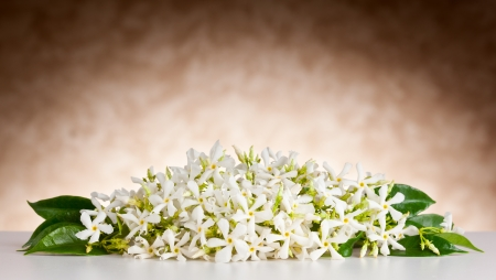 Jasmine flowers on white table and beige background Stock Photo