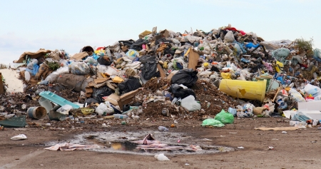 Birds and dogs on the landfill Stock Photo - 17302737