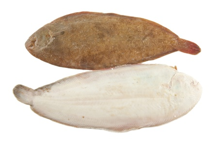 sole: Common sole on white background