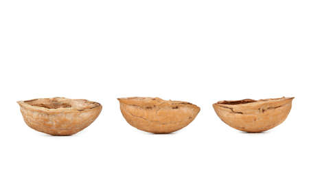 3 4 length: Walnut shells on white background Stock Photo