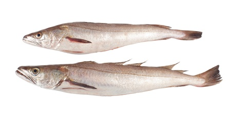 Two codfish on white background photo