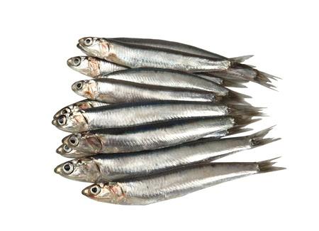 sardine: Sardine crude fresche su sfondo bianco Archivio Fotografico