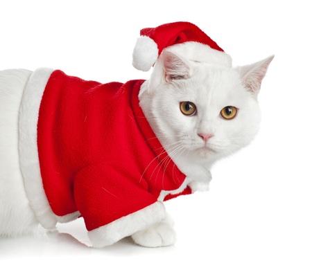 White Cat with yellow eyes on white background Stock Photo - 20133261