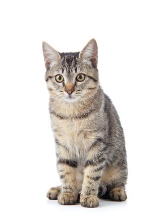 Beau chat sur fond blanc. Banque d'images