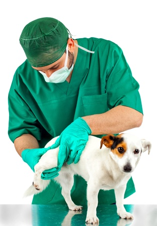 Veterinarian examines the dog's hip on white background photo