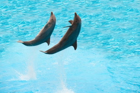 Two dolphins jumping in the pool photo