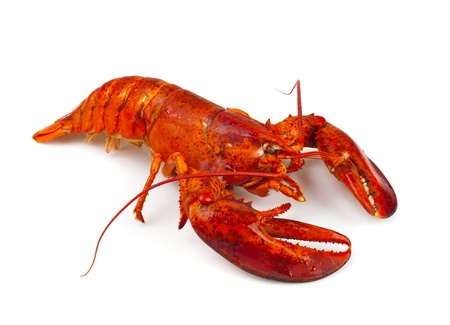 Red lobster isolated on white background Reklamní fotografie - 22028425