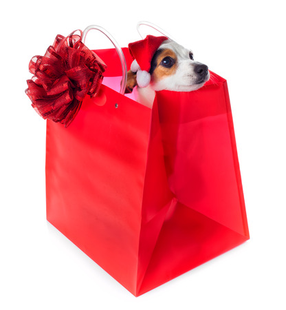 Young Jack Russel wearing santa claus dress in red shopping bag on white background photo