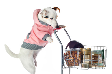 pet store: Jack Russell dog pushing a shopping cart full of food  on white background
