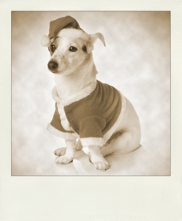 Vintage sepia polaroid with dog as santa. photo