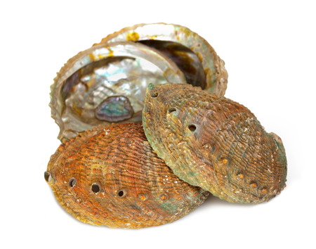 Four abalone shells on a white background photo