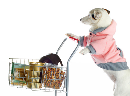 products food: Jack Russell dog pushing a shopping cart full of food on white background