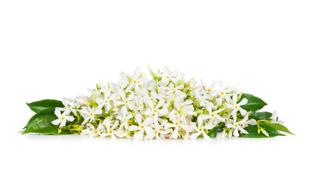 Beautiful Jasmine flowers isolated on white  Stock Photo