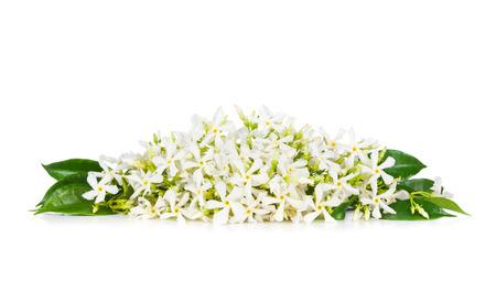 Beautiful Jasmine flowers isolated on white  Stock Photo