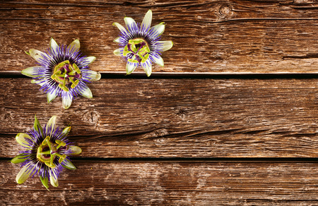passionflower: Passiflora caerulea, passionflower flower on wooden table.