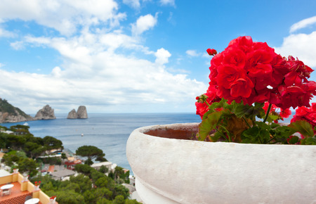Red geraniums with Faraglioni in background, famous giant rocks, Capri island in Italy  photo