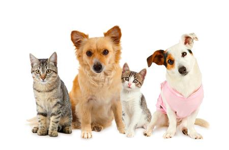 白い背景の前で犬と猫のグループ