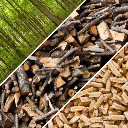 Steps of industrial production for wooden pellets.