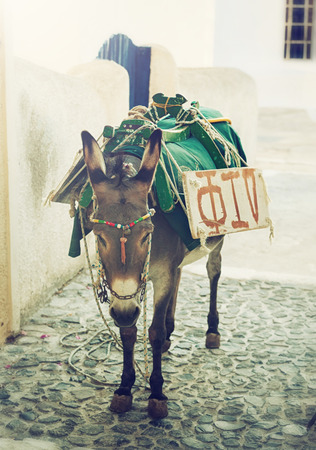 Donkey in the streets of Santorini island, Greece. photo