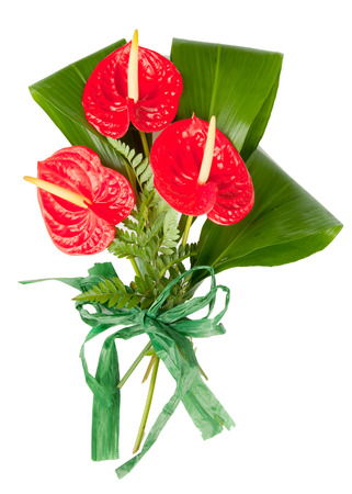 Red anthurium flowers isolated on white background photo