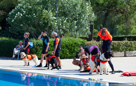 rescuing: EMPOLI, ITALY - SEPTEMBER 20, 2015: Lifeguard dogs, italian school Cani Salvataggio - S.I.C.S. Rescue demonstration in swimming pool.