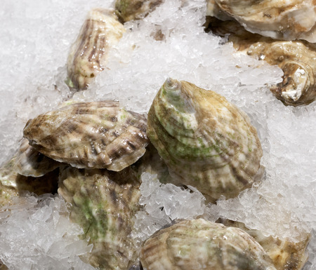 chelsea market: Closed oysters on ice for sale at chelsea market, New York. Stock Photo