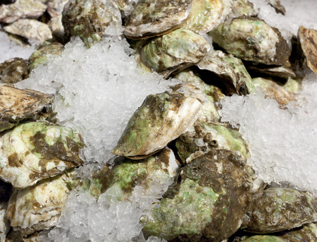 aphrodisiac: Closed oysters on ice for sale at chelsea market, New York. Stock Photo
