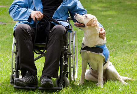 Labrador guide dog and his disabled owner on green grass. Imagens
