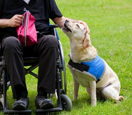 paraplegico: Labrador perro guía y su dueño con discapacidad en la hierba verde. Foto de archivo