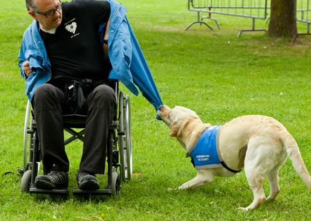 paraplegic: Montelupo Fiorentino, Italia - 12 de junio 2016: La vida, el evento de un perro dedicado a la valorizaci�n y las utilidades de perros. Manifestaciones que tuvieron lugar en el parque Ambrogiana.