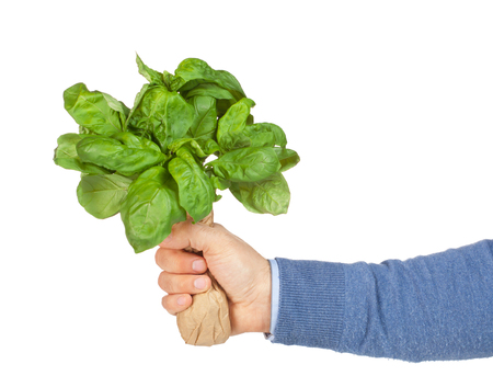 arm bouquet: Man with basil bouquet in hand  isolated on white background.