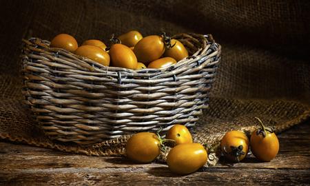 Varieties of yellow Heirloom cherry tomatoes called yellow pear and yellow datterino (or plum) cherry tomatoes. 版權商用圖片 - 111211189