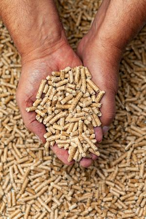 Alternative biofuel from sawdust wood pellets in hands.