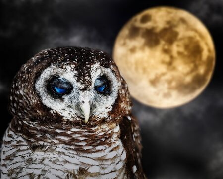 Portrait of a tawny owl, strix aluco with moon and clouds in background. Scary image suitable for Halloween.