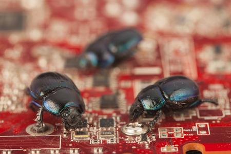 Bugs on a computer chip Standard-Bild