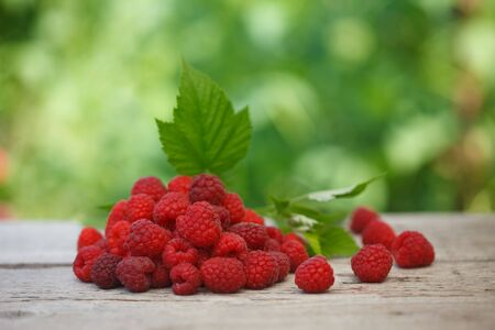 Pile of fresh Red raspberries with raspberry leaf on old wooden table, with green  blurred background. Healthy eating concept.