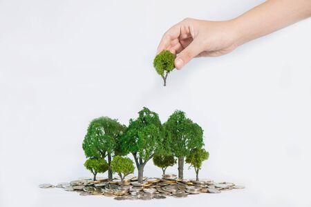 plantando arbol: el crecimiento de la moneda de los �rboles, mano que sostiene una plantaci�n de �rboles