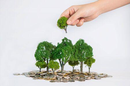 plantando arbol: el crecimiento de la moneda de los árboles, mano que sostiene una plantación de árboles
