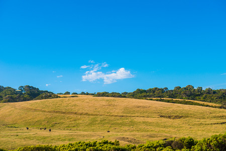 A farm scene, captured from the Great Ocean Road, Southern Victoria, Australia