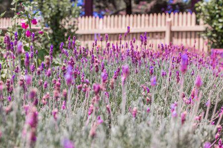 flowers lavender color violet wall background