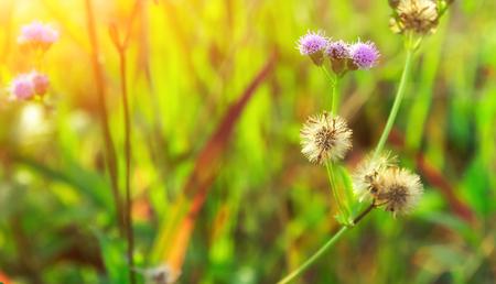 The flower is shower the sunlight morning.