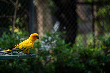 A beautiful yellow parrot is chilling out while standing on an iron cage.