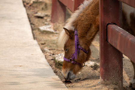 Closeup of the sad eye of miniature horse or pony looking like showing very unhappy about loneliness. Thoughtful horse-eye portrait and domestic horse in a stable cage.