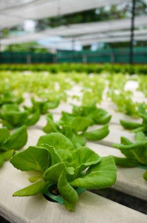 hydroponics: Hydroponics Gardening