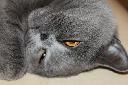grapple: cat