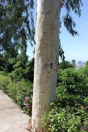 inscription on a tree trunk