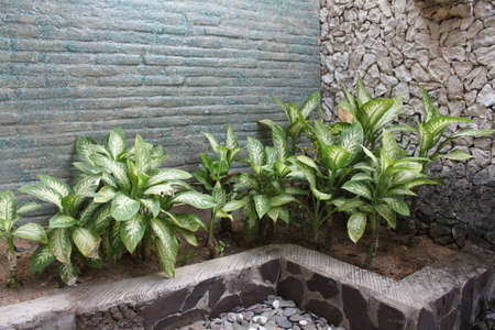 plants in the interior of a bathroom