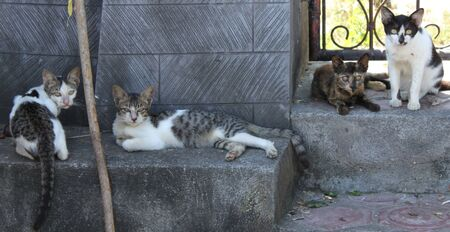 close your eyes: All cats look in your eyes, Bali, Indonesia